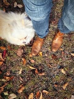 犬とブーツの写真・画像素材[2736320]