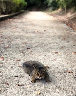 猫,動物,屋外,景色,人物,道,野良猫,地面,ネコ,うつ伏せ