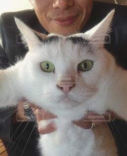 猫,動物,屋内,ペット,人物,ネコ,びっくり