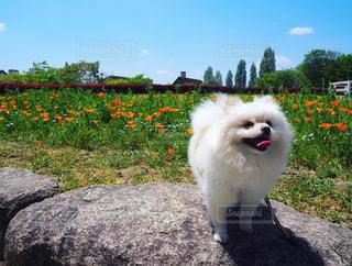 岩の上に立つ犬の写真・画像素材[3031303]