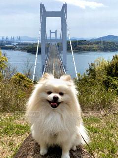 橋と犬の写真・画像素材[3250465]
