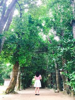 森の木の中に立っている人の写真・画像素材[2542837]