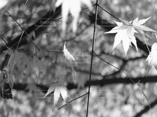 光と影の写真・画像素材[2572313]
