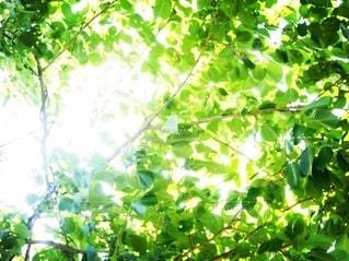 春の木漏れ日の写真・画像素材[2632621]
