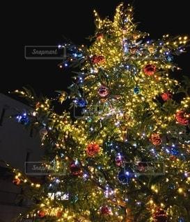 クリスマスツリーの写真・画像素材[2637123]