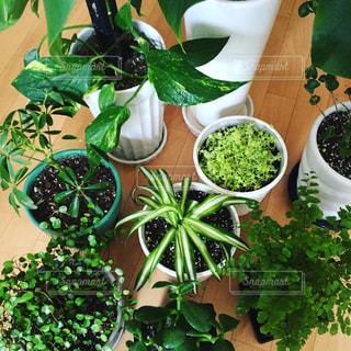 我が家の観葉植物たち🌴大集合の写真・画像素材[2724807]
