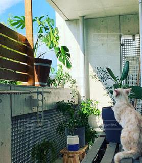 にゃんことベランダの植物たち。の写真・画像素材[4918237]