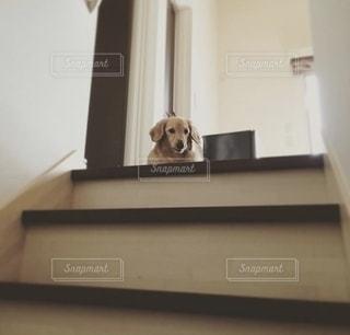 犬の写真・画像素材[2747872]