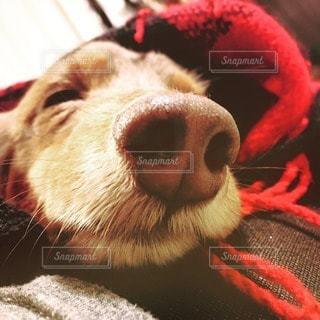犬の写真・画像素材[14727]
