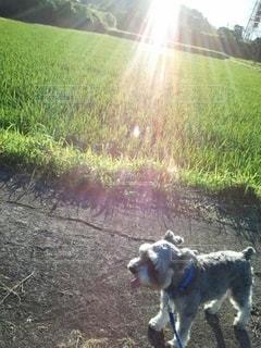 夕陽とわんちゃんの写真・画像素材[2626441]