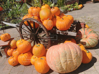 かぼちゃの写真・画像素材[2577603]