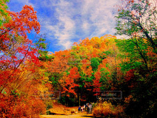紅葉と青空のコントラストの写真・画像素材[2535003]