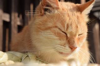 猫,動物,かわいい,ペット,人物,伊勢,おかげ横丁,看板猫,ネコ,人懐っこい