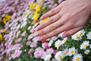 花とリングの写真・画像素材[2823839]