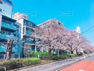 春の写真・画像素材[414165]