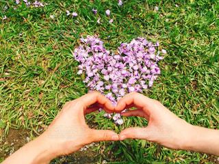 花,仲良し,ハート,愛,台湾,デート,淡水