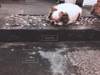 犬の写真・画像素材[473816]