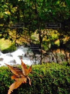 瑞々しさの写真・画像素材[2540568]