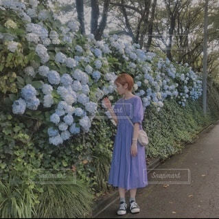 夏の紫陽花の写真・画像素材[3693446]