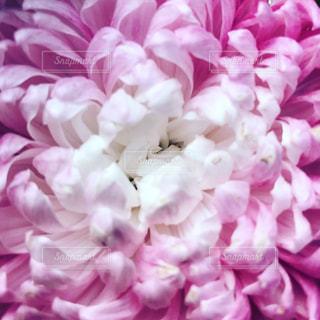 近くの花のアップの写真・画像素材[1374784]
