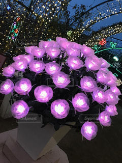 光の紫の薔薇の花束の写真・画像素材[1374911]