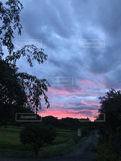 風景,空,屋外,夕焼け,樹木