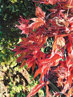 紅葉,草木,美しい自然