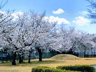 空,春,樹木,ブロッサム