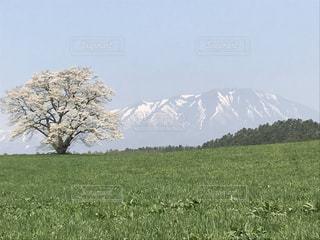 自然,風景,屋外,景色,樹木,一本桜,日中
