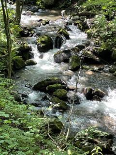 奥入瀬渓流の写真・画像素材[4935514]