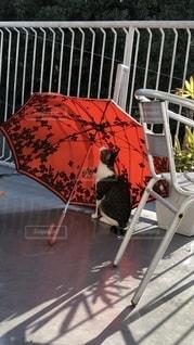 傘と猫の写真・画像素材[2721524]