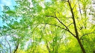 木漏れ日の写真・画像素材[2641072]