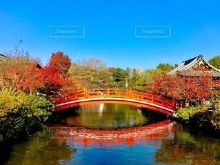 秋の快晴の写真・画像素材[2540850]