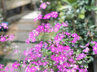 花,屋外,ピンク,紫,草木,日中