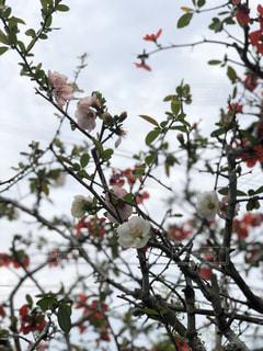 風景,空,花,屋外,樹木
