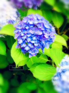 花のクローズアップの写真・画像素材[3377324]