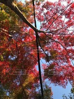 木のクローズアップの写真・画像素材[2537365]