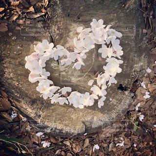 風景,花,春,桜,木,アート,花見,サクラ,樹木,ハート,お花見,イベント,地面,Spring,さくら,咲く,桜アート