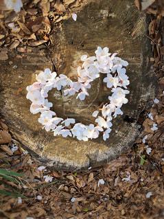 自然,花,春,桜,木,アート,花見,景色,サクラ,ハート,お花見,イベント,土,地面,手作り,草木,さくら,咲く