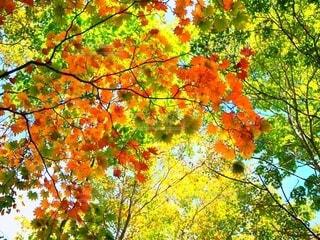 木のクローズアップの写真・画像素材[2535985]