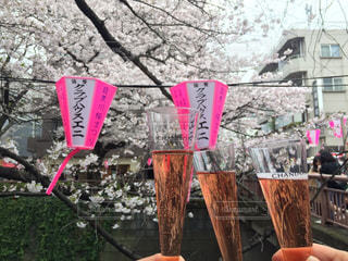 桜,お酒,晴天,お花見,リラックス,グラス,乾杯,ドリンク,女子会,シャンパン,手元