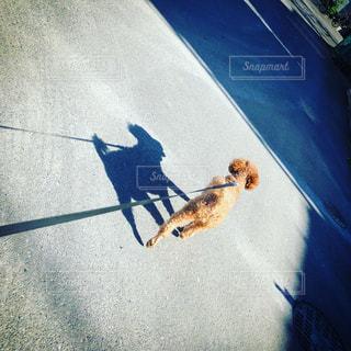 道路の脇に座っている猫の写真・画像素材[2718846]