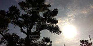 風景,空,木,太陽,光,樹木,草木
