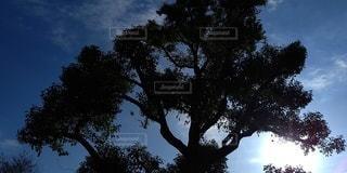 自然,空,屋外,太陽,光,樹木,草木