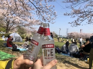 桜,お酒,花見,グラス,乾杯,ドリンク,スミノフ