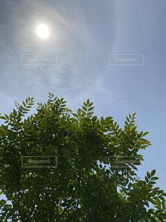 気持ちいい日光浴の写真・画像素材[4530795]