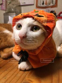 猫の写真・画像素材[2754231]