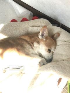 ベッドに横たわっている猫の写真・画像素材[2700329]