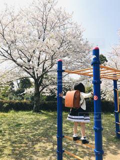 桜とランドセルの写真・画像素材[2556428]