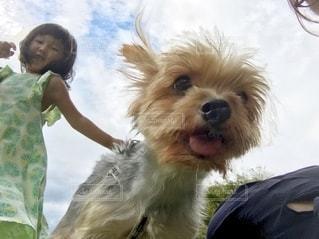 犬を抱いている人の写真・画像素材[2713367]